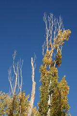 Blue sky and branches (Zorro1968) Tags: blue trees sky art branches sony stock artforsale alpha700 haynespointprovincialpark