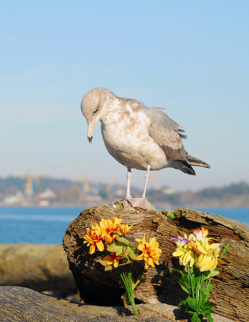 Gull with Fake Flowers on the Beach