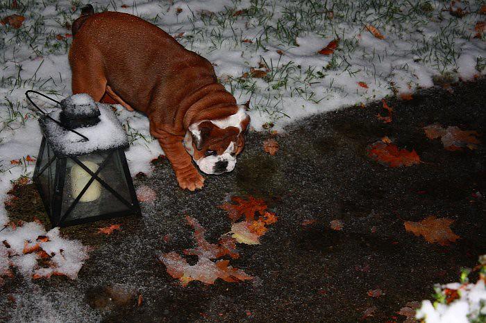 First snow 11-10 (2)