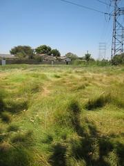 Shaggy lawn