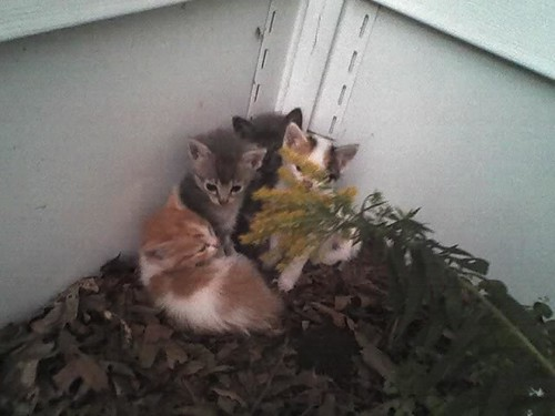 Farm kittens
