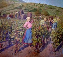Grape Harvest in Vrsac (jaca gabric) Tags: vintage serbia vine vino wein trauben vojvodina srbija weinlese grozdje serbien berba vrsac berbagrozdja grozdjebal pajajovanovic