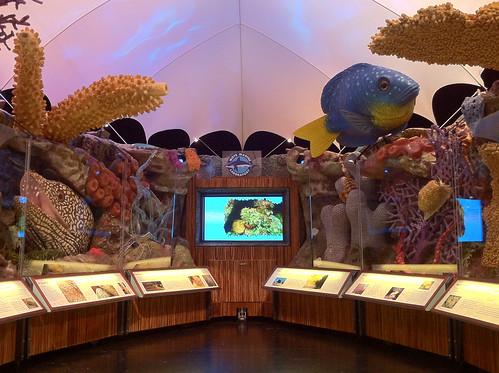 Sanctuary Reef 3