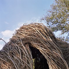 Natural History (12th St David) Tags: newyork 120 6x6 film brooklyn mediumformat awesome naturalhistory hut brooklynbotanicgarden mamiyac3 mittelformat patrickdougherty soawesome stickwork fujipro160s formatomedio autaut sekor80mmf28
