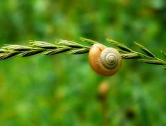 Snail - by Kat...