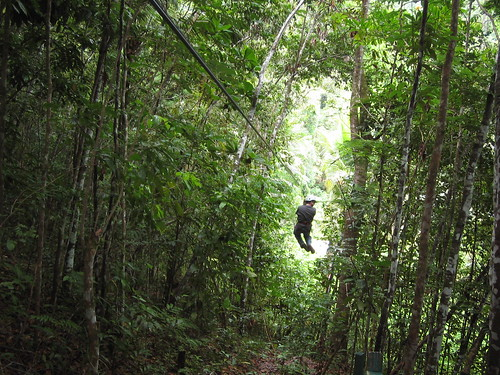 Zipping Through the Jungle Canopy
