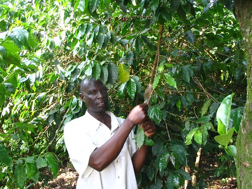Samuel and Coffee Tree