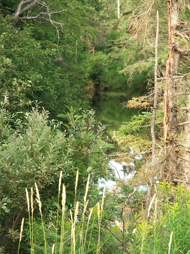 River near Salisbury, New Brunswick, taken on a recent bicycle trip.