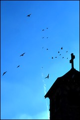 sunday mass (dogfaceboy) Tags: church birds interestingness cross flock hamilton explore mass interestingness172 birdbook i500 worshipthebirds explwhore