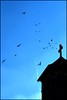 sunday mass (dogfaceboy) Tags: church birds interestingness cross flock hamilton explore mass interestingness172 birdbook i500 worshipthebirds explwhore™