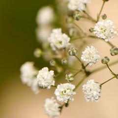 (hadewijch) Tags: flowers macro 105mmf28 nikond40