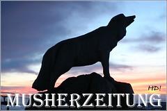 Husky-Vater - unser Maskottchen der WSA Schlittenhunde/Husky WM 2010, Oberwiesenthal, Erzgebirge