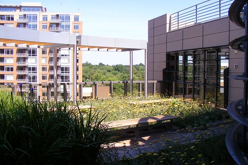 UniTher Green Roof (2)
