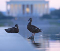 At the Reflecting Pool - by ehpien