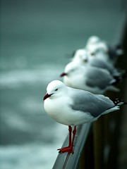 Waiting (Bruce Cooke) Tags: ocean sea bird beach water seaside waiting seagull gulls australia olympus explore nsw magical forster tuncurry e500 cotcmostfavorited madphotographer superbmasterpiece auselite brillianteyejewel shopofcuriosities naturewatcher