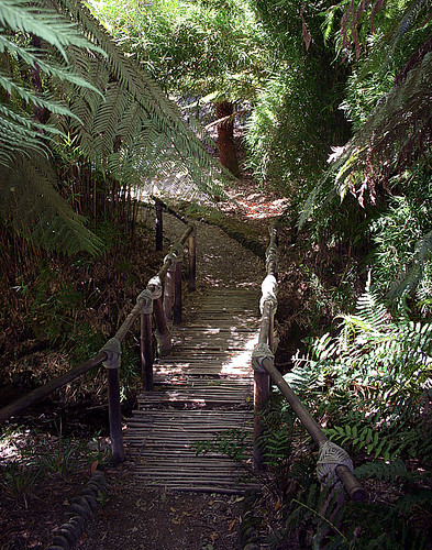 The Jungle Bridge