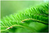 Shades of green (Lee_Bryan) Tags: plant macro green nature canon eos leaf dof 100mm usm f28 mikegreen naturesfinest blueribbonwinner 400d aplusphoto superbmasterpiece diamondclassphotographer flickrdiamond excellentphotographeraward top30green alemdagqualityonlyclub gdmike