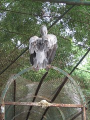 Sri Chamarajendra Zoological Gardens (dciandy) Tags: india bird zoo mysore mysorezoo srichamarajendrazoologicalgardens