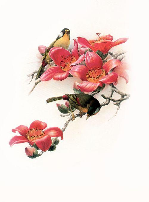 1475190456 96d5b03a4b o - cute bird paintings