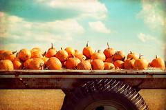 """Produce great pumpkins, the pies will follow later."" (CarolynsHope) Tags: blue autumn sky orange tractor fall texture halloween clouds rural vintage season pumpkin aqua country pumpkins seasonal kimklassen carolynshope"