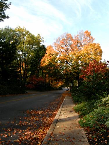 fall2010