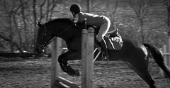 horse jumping, gymnastic, horse training schedule, horse fitness, fitness schedule
