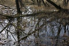 Rozlewisko 54 (Hejma (+/- 4000 faves and 1,3 milion views)) Tags: trees colour nature water cane landscape spring poland polska natura mirrorimage chiaroscuro woda backwater wiosna kolor trzcina drzewa krajobraz odzwierciedlenia wiatocie rozlewisko