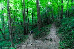 The Path Less Traveled (:GRJohnson:) Tags: road travel trees mountains green art nature trek landscape outdoors nationalpark woods nikon poem peace hiking path tennessee scenic trail serenity robertfrost greatsmokymountains d90 grjohnson grjphotography