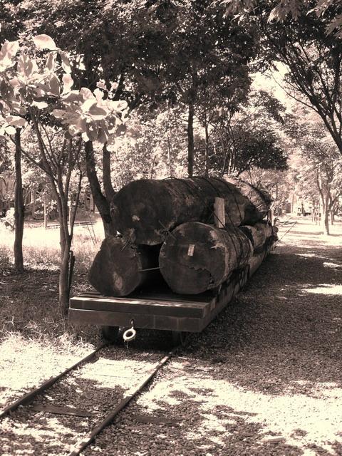 1467296445_珍貴的原木