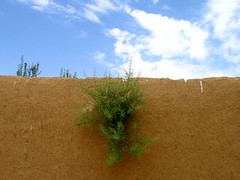 (matiya firoozfar) Tags: sky nature wall straw explore clay bramble matiya      firoozfar