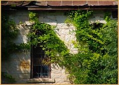 Vine Covered Boat House (earthwoman1967) Tags: stone sanantonio vines nikon texas boathouse bexar brackenridgepark