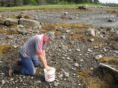 Dad clamming