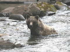 Grizzly_5190 - by ru_24_real