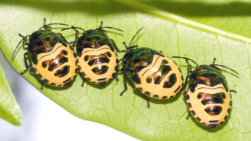 bugs four