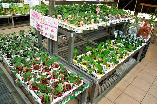 My garden 0106 September 18, 2010
