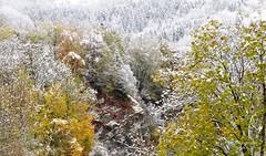 Mlange de saison (dammo07) Tags: france montagne alpes automne french neige arbre blanc moutain rhone maurienne valle rhonealpe montaimont