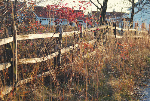 Fall_Fenceline