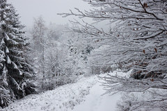 20100106-IMG_6094.jpg (Rafal Kubik) Tags: winter snow mountains forest landscape beskidy beskidzywiecki