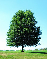 Woodland Mound (~ Liberty Images) Tags: park blue ohio summer sky tree green nature canon flora cincinnati powershot oh verdant lonely colourful a80 cinci lonetree woodlandmound