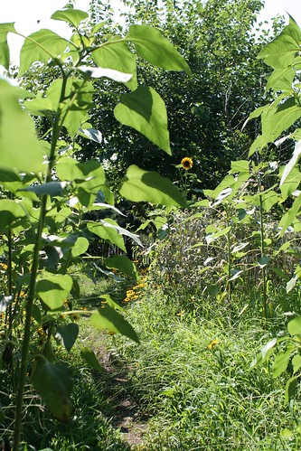 Garden in the park