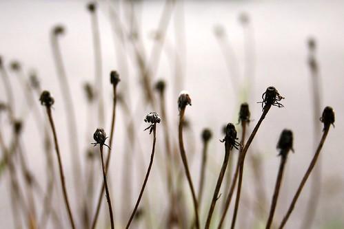 Ruderal flowers II