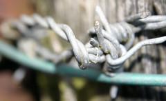 Weiren bigog / Barbed wire (MyfanwyX) Tags: wales cymru powys machynlleth