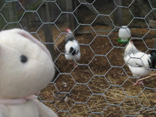 http://farm2.static.flickr.com/1337/1334194689_17956a49f2.jpg
