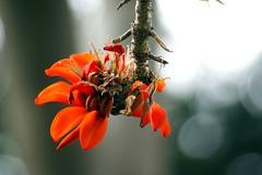 Flowers_051