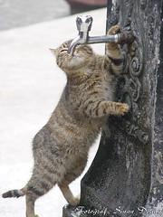 ok susam (Sinan Doan) Tags: animal istanbul kedi estambul hayvan isztambul musluk  sinandoan  istanbulphotos istanbulfotoraflar