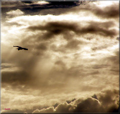Gray Sky (ShacklefordPhotoArt) Tags: sky sun bird clouds florida everglades soe wildliferefuge delraybeach loxahatchee greatphotographers supershot shieldofexcellence platinumphoto anawesomeshot superbmasterpiece