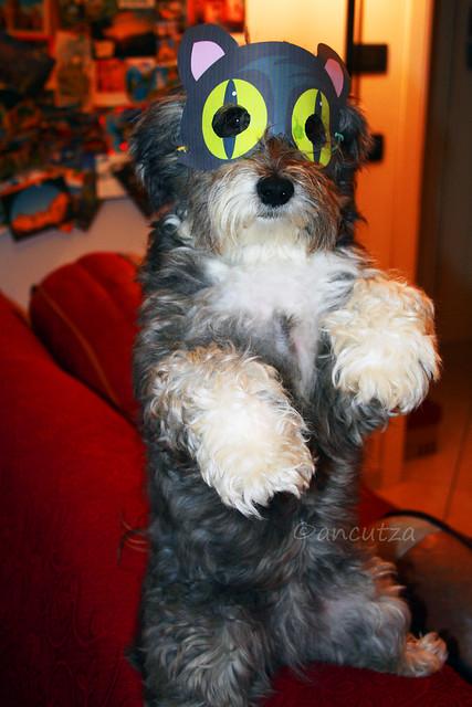 Cane divertente mascherato da gatto per Halloween