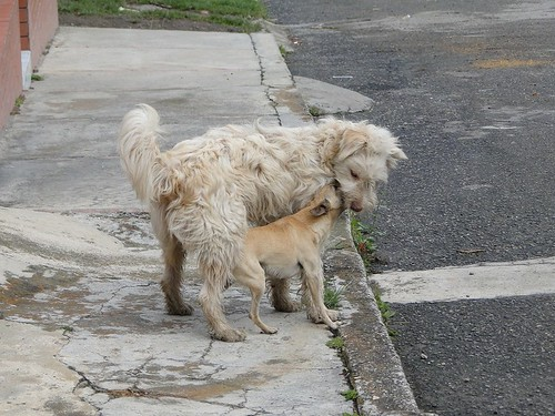 videos de perros cogiendo gratis:
