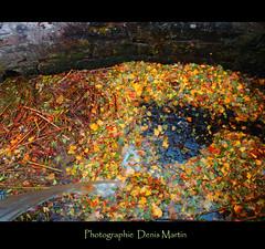 La Moselle (denismartin) Tags: autumn fall leave automne herbst nancy otoo autunno lorraine outono feuille meurtheetmoselle   denismartin eloyes