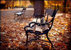 autumn leaf on a bench (andreas gessl) Tags: schnbrunn vienna wien autumn sunlight leaves bench leaf bokeh herbst bank bokehhearts